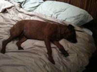 Josie in Bed