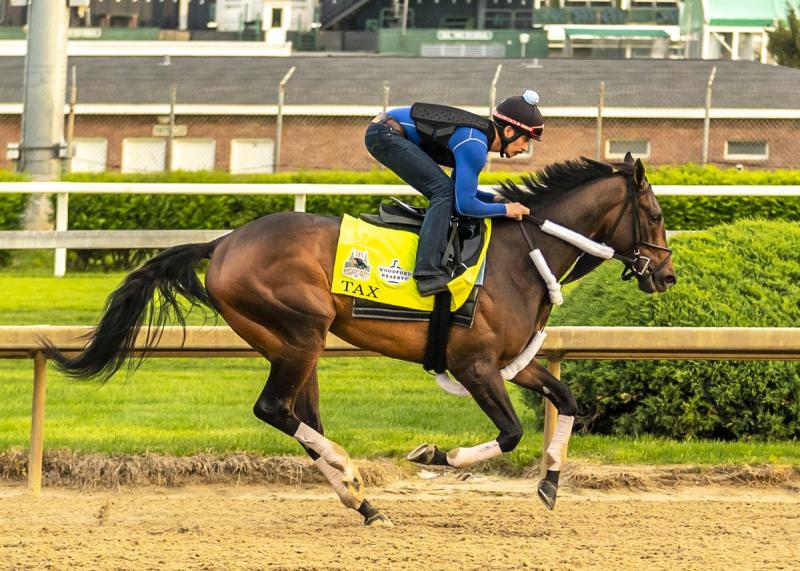 Tax Horse